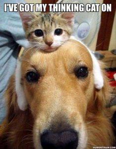 thinking cat on